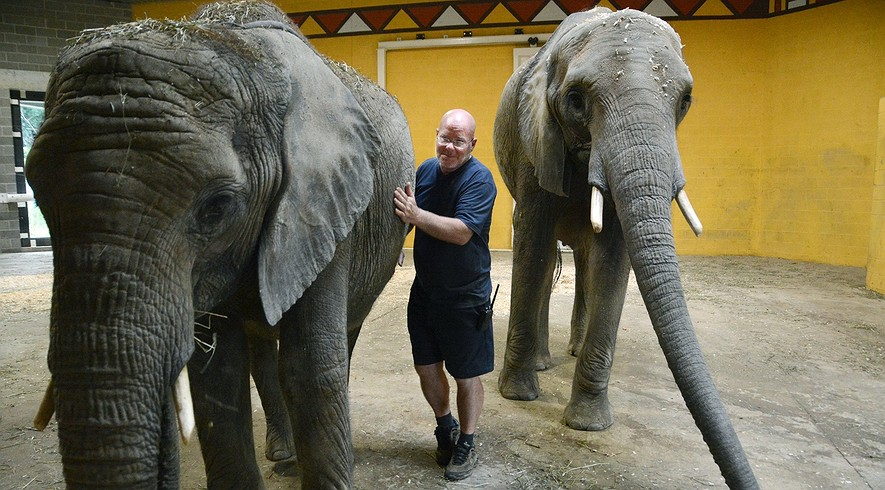 Joined by elephants Zuri (left) and her sister Victoria, Willie Theison, the elephant program manager at the Pittsburgh Zoo, talks about Project Frozen Dumbo which aims to help elephants breed in captivity.