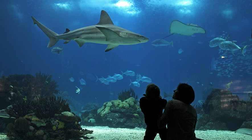 A woman and her child look at a shark swimming in the main tank of the Oceanarium of Lisbon, Portugal, Feb. 20, 2014. The Oceanarium, which opened during Expo 1998, displays different aquatic fauna species from the five oceans in the world.
