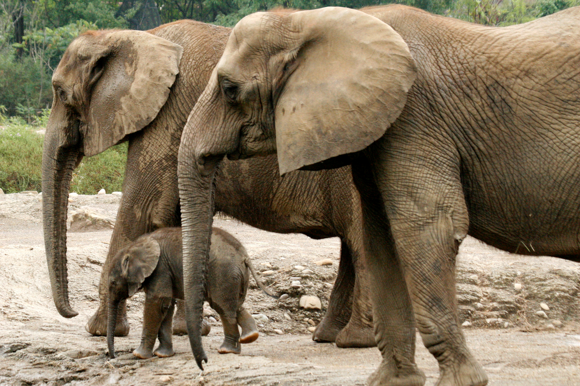 living like weasels by annie dillard animal rights group complains about pittsburgh zoo elephants