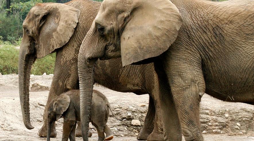 short essay on zoo animals