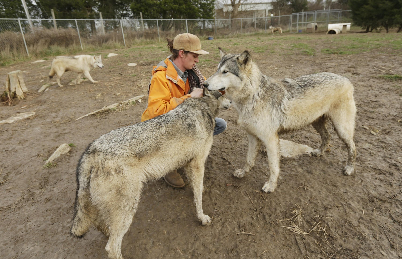 Wild Wolf Run