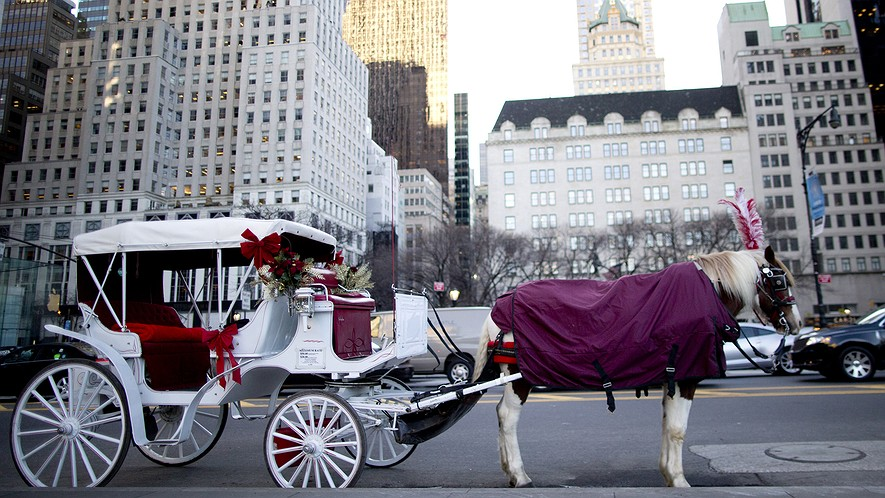 A carriage horse is covered in a blanket as its driver, not pictured here, waits for customers on Central Park South in New York City, Jan. 13, 2016.