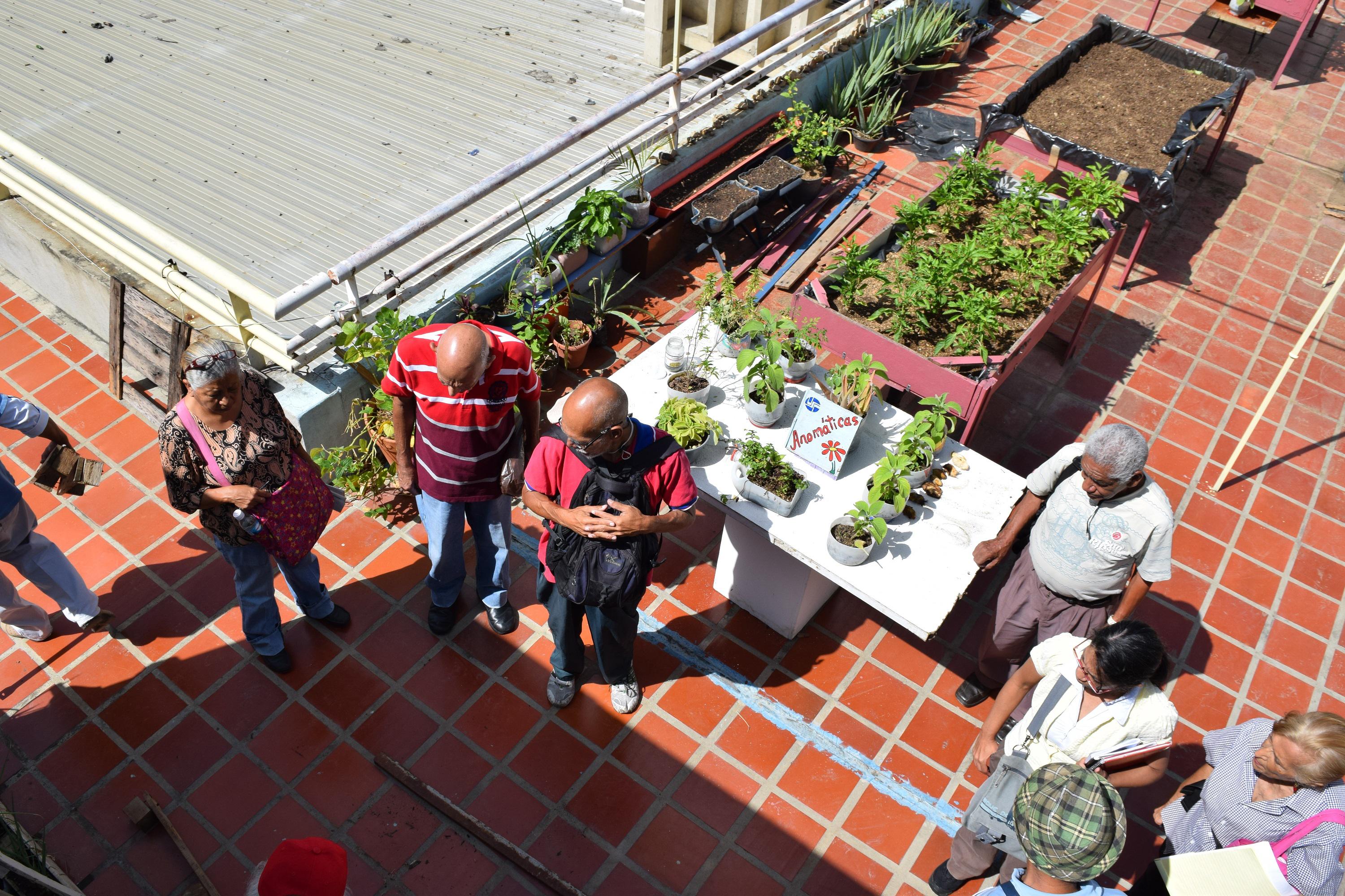 food society food crisis has venezuela urging city residents to plant more gardens