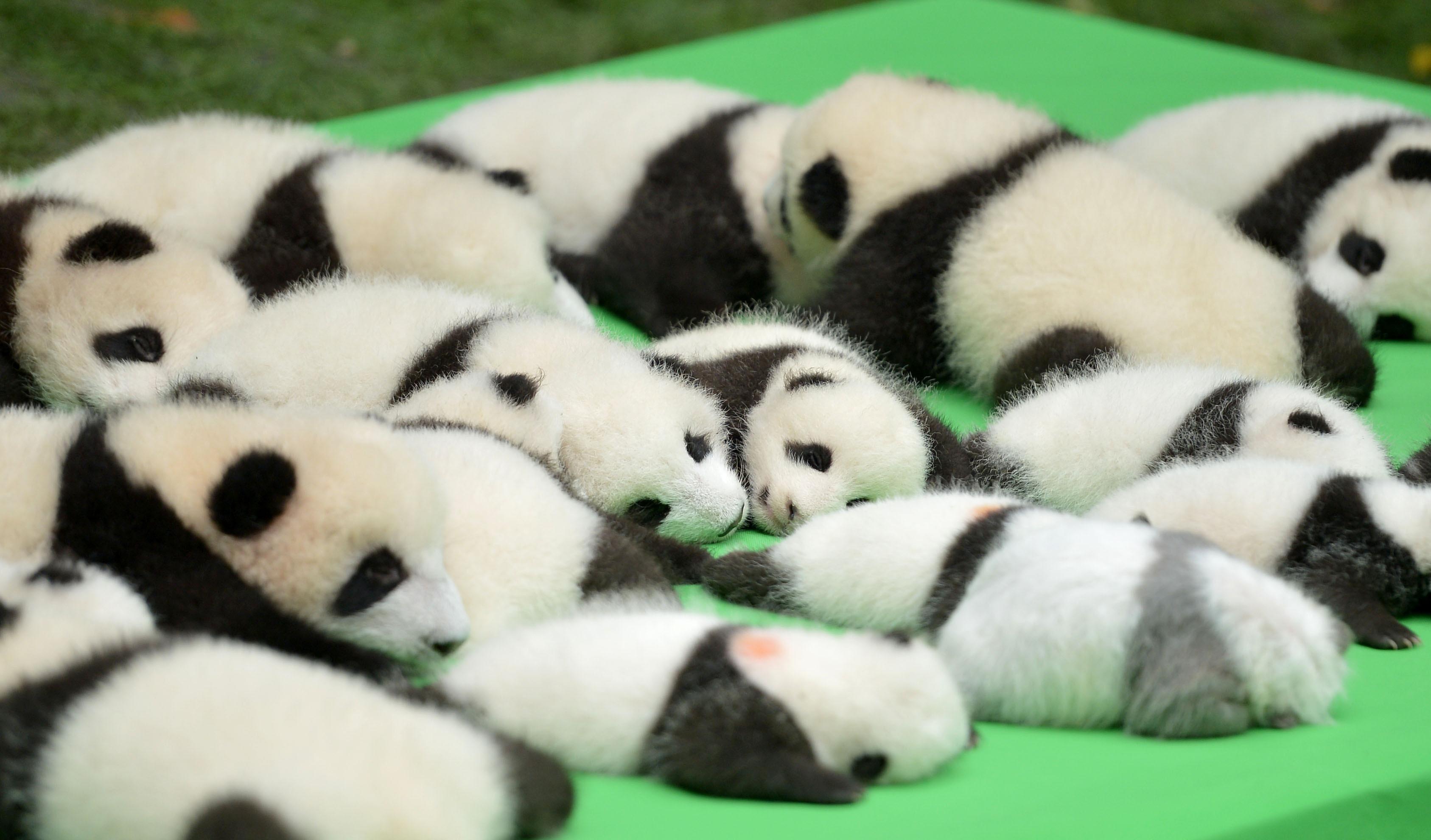 article panda