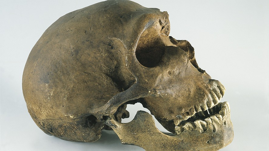 The skull, with its teeth, of a Neanderthal man (Homo neanderthalensis). Photo by: DEA/A. DAGLI ORTI/De Agostini/Getty Images