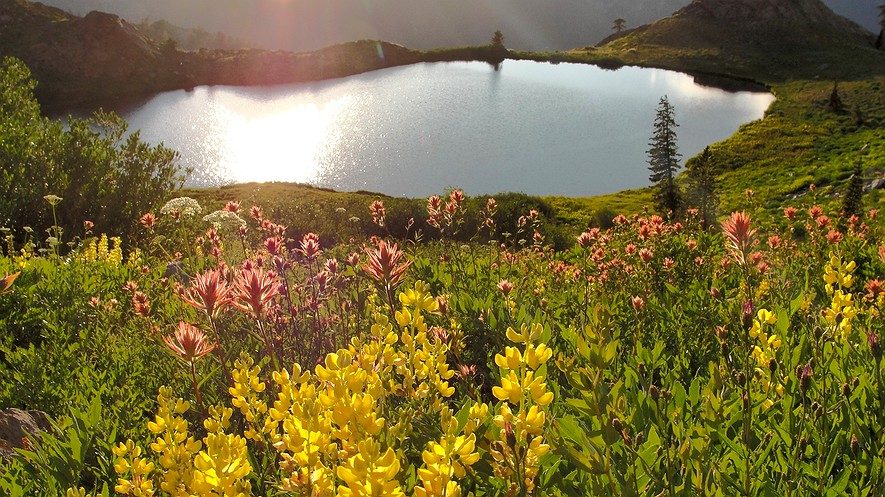 Wildflowers bloom at Diamond Lake, California. The state's drought emergency has been lifted. Photo: Miguel Vieira via Flickr