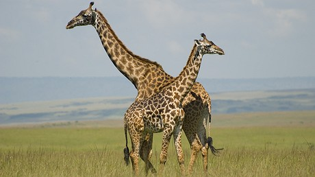 Environmental wonders of the world, like Kenya's Masai Mara National Reserve pictured above, are a huge draw for amateur photographers. But is a #Hashtag the key to saving critical ecosystems? Photo: Wikimedia