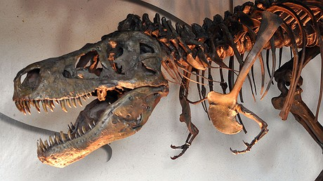 A traveling replica of a Tyrannosaurus rex named Sue is displayed in September 2013 at the Washington Pavilion's Kirby Science Discovery Center in Sioux Falls, South Dakota.
