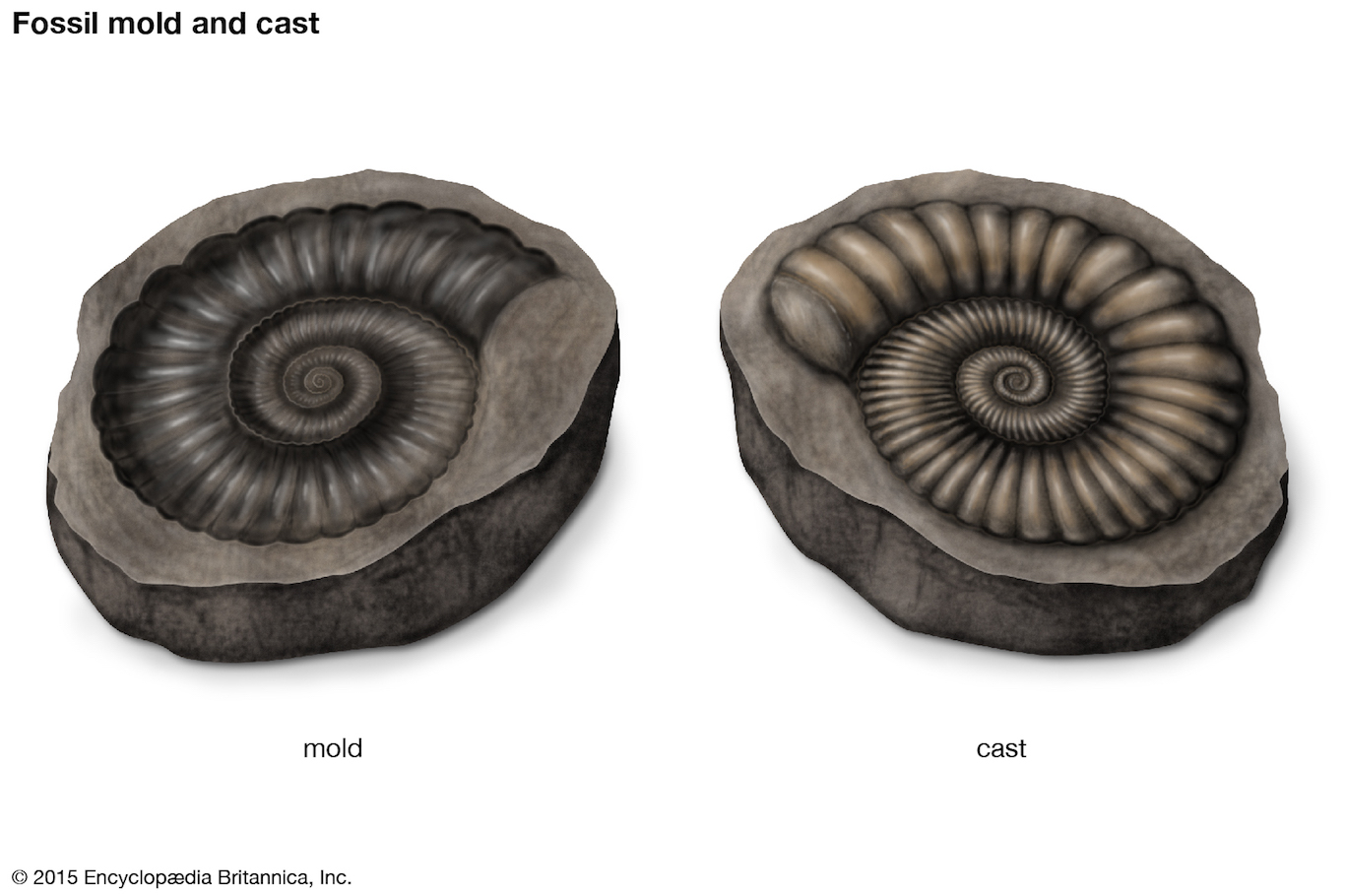 Examples Of Mold Fossils