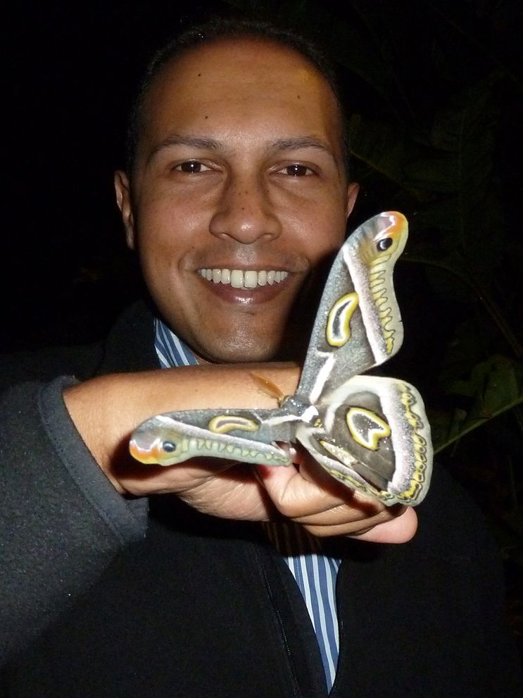 Dino Martins is an entomologist from Kenya. He is holding an African white-ringed atlas moth. Photo courtesy of Dino Martins. [click to enlarge]