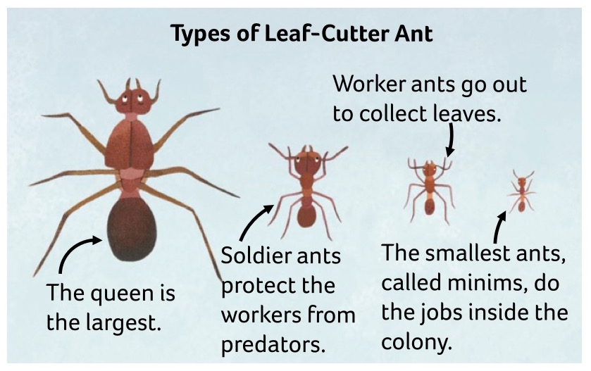 Newsela animal atlas meet the animals of central and south america you can spot them in the country of bolivia these ants march in long lines their strong jaws cut up leaves the ants carry the pieces back publicscrutiny Image collections